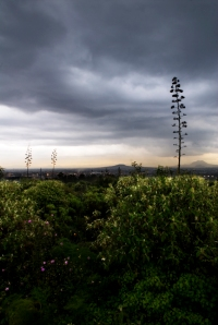 Editado Por Corredores del Bosque de Tlalpan 2009